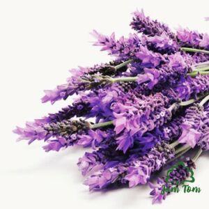 Levendula illóolaj extra finom (Lavandula officinalis) - 10 ml