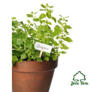 Oregánó illóolaj (Oreganum vulgare L.) - 10 ml