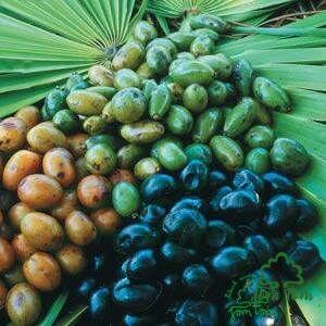 Fűrészpálma por (Sabal serrulatum) - 100 gr