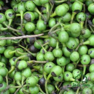 Litsea illóolaj (Litsea cubeba Pers) - 50 ml