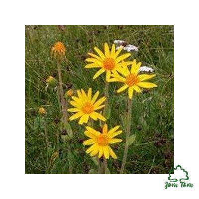 Árnika virág (Flores arnicae mex.) 50 gr
