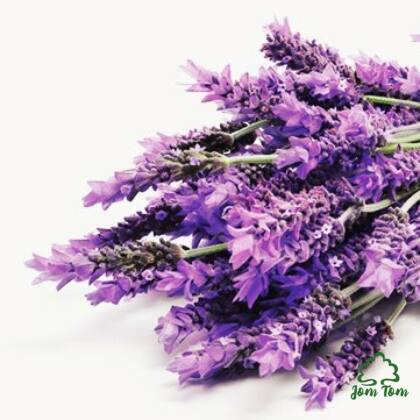 Levendula illóolaj (Lavandula angustifolia) - 10 ml