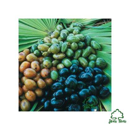 Fűrészpálma por (Sabal serrulatum)