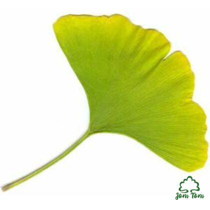 Ginkgo Biloba levél (Páfrányfenyő) - 50 gr