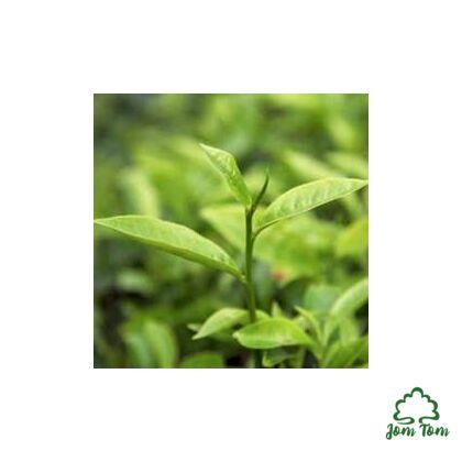 Teafa illóolaj BIO (Melaleuca alternifolia) - 50 ml