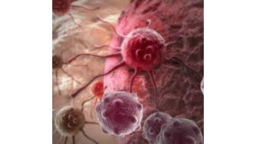 helminthosporiosis szervekben gyomorrák fajták